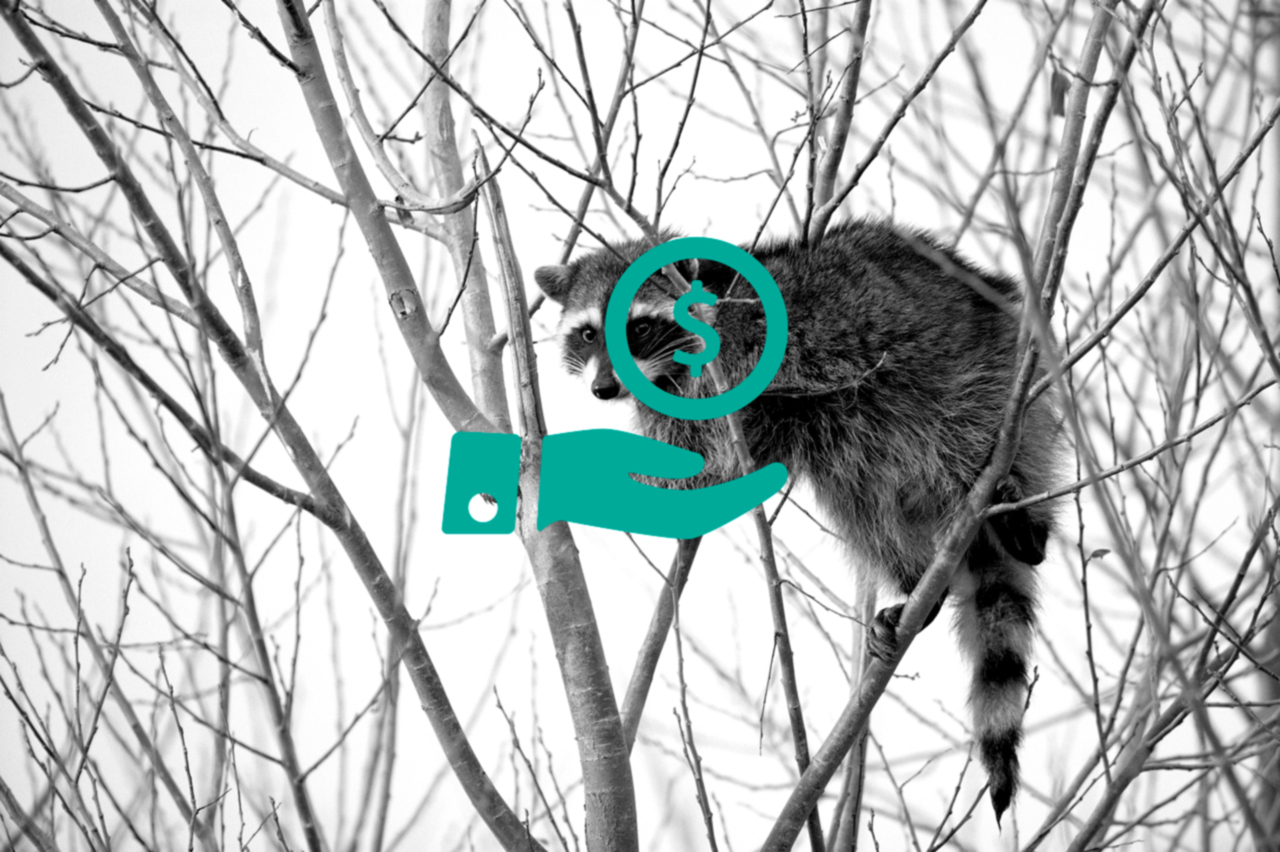 Raccoon_climbing_in_tree