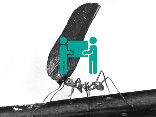 ant-carry